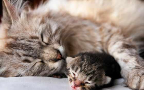 кот, кошки, котята, котенок, кошек, всегда,
