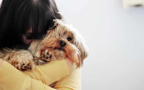 девушка, собака, настроения, широкоформатные, настроение,