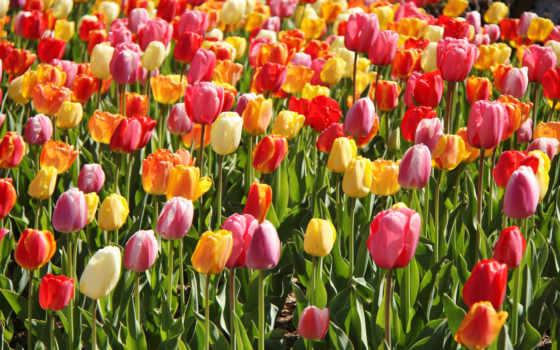 Цветы 20060