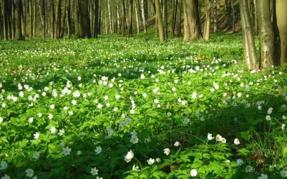весна, марта, природа