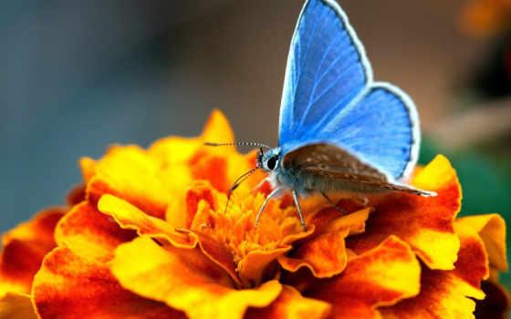 бабочки, узоры, яркие