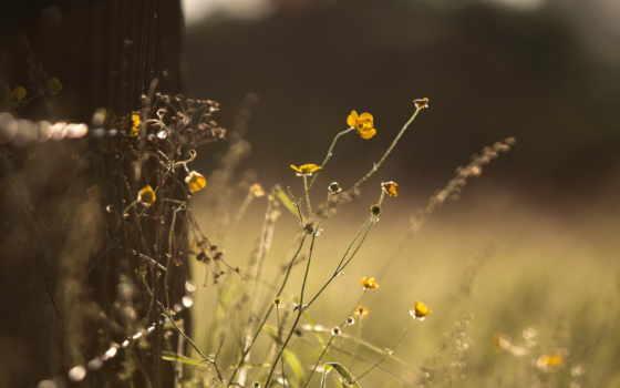 природа, разное, трава