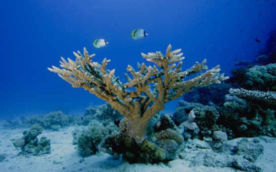bottom, морское, world, кораллы,