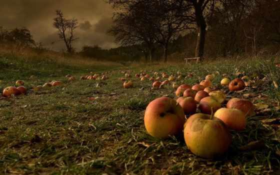 яблоки, осень, природа, garden, листья, фрукты, бури, после, опавшие,