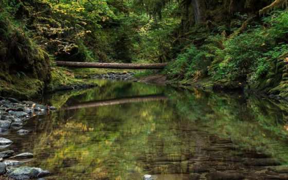 природа, деревья, лес Фон № 64804 разрешение 1920x1200