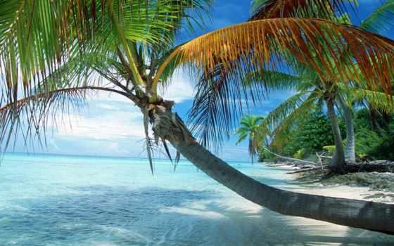 полинезия, французская, bora, palm, раскинувшаяся, во, компании,
