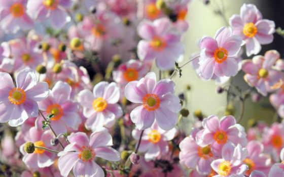 цветы, природа, summer Фон № 87986 разрешение 1680x1050