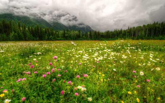 landscape, горы, трава