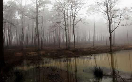 swamp, лес, туман