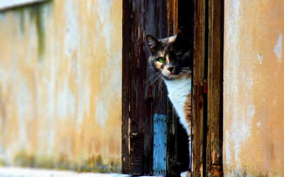 кот, кошки, окно, окне, pic,