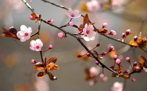 природа, desktop, free, flowers, цветы, dowload, закат,