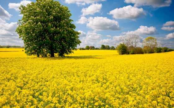 весна, ukraine, рапс, дерево, поле, каштановый, красиво, небо, потратить, природа,