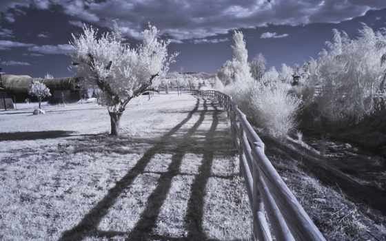 infrared, landscape, природа, photography, desktop, high, trees,