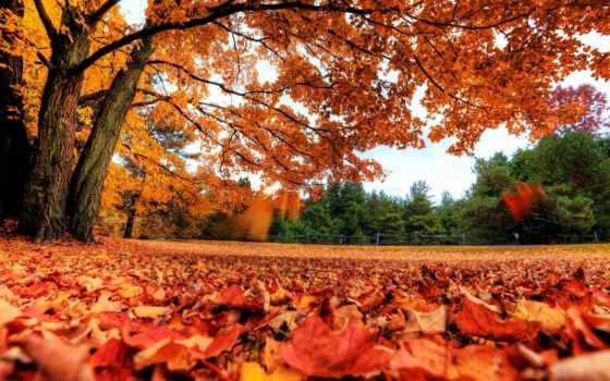 осень, листья Фон № 6972 разрешение 2880x1800