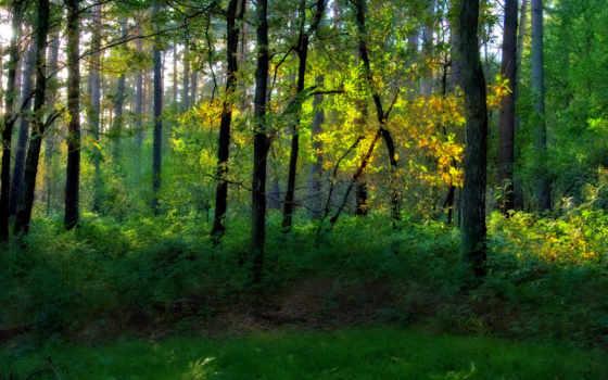 лес, серые