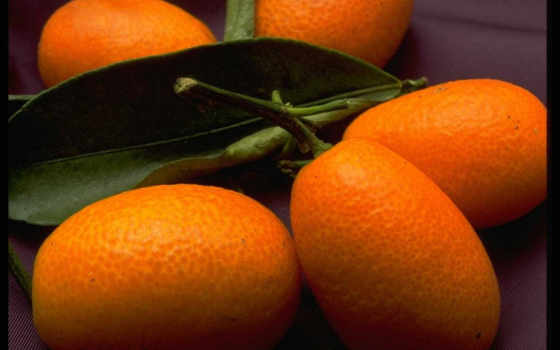 фрукты, плод, ягоды