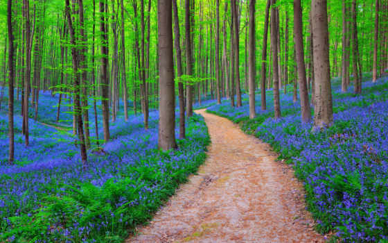 лес, природа, bluebells, планете, world,