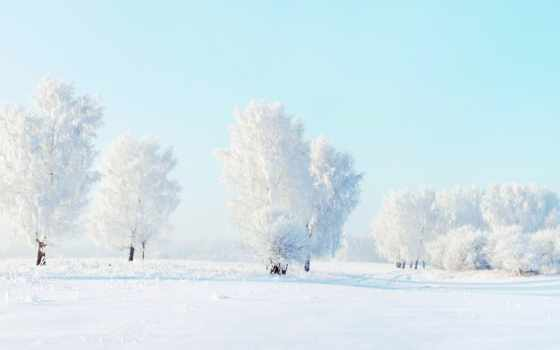 снег, иней, winter, trees,