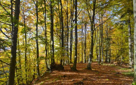 you, лес, пасть