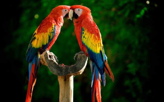 попугаи, яркие, разноцветные