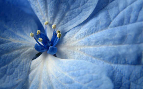 blue, цветы, flowers