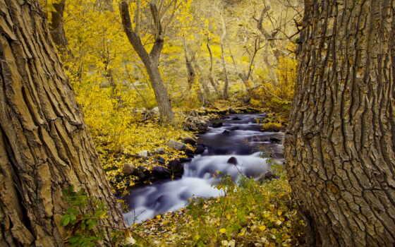 осень, trees, пасть, landscapes, природа, forests, rivers, streams, лес, seasons, листья,