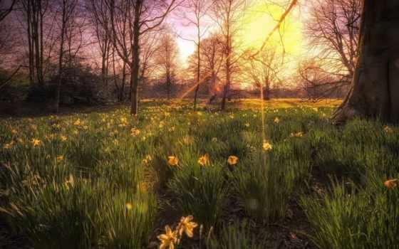природа, цветы, свет, trees, лес, вербы, экран, весь,
