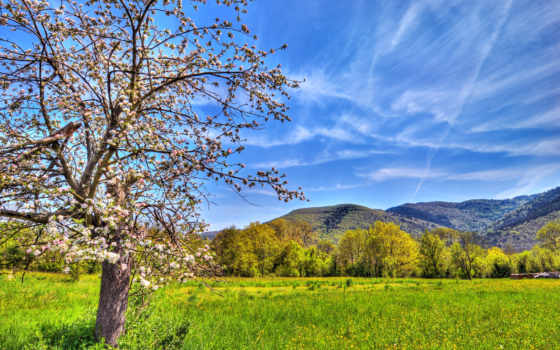 весна, природа, небо, color, поле, яблоня, горы, дерево,
