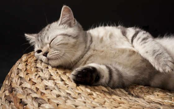 спит, котенок, сладко