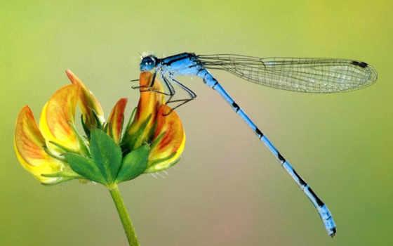libellula, ди, чё, una, della, significato, sua, libellule,