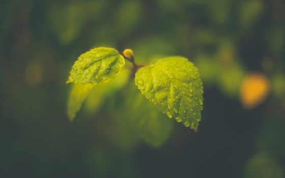 листва, макро, капли, photos, images, iphone, зелёный, anime, pictures,