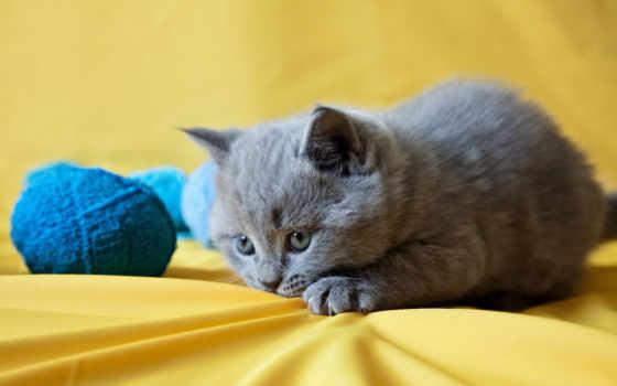 котенок, играет