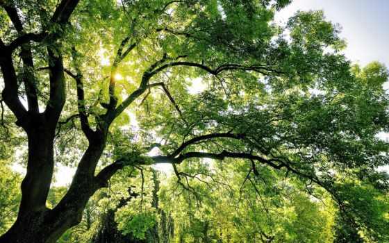 дерево, небо, природа, shining, солнце, before, autumn, donate, заставки, hintergrundbilder, green,