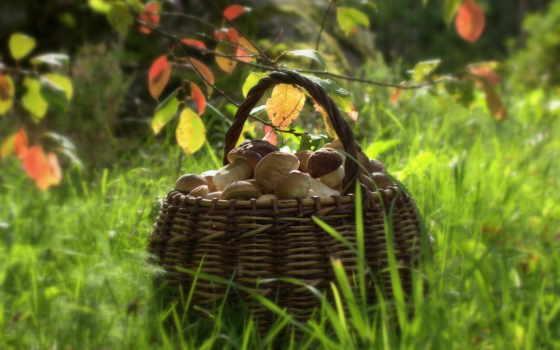 грибы, корзина, природа,