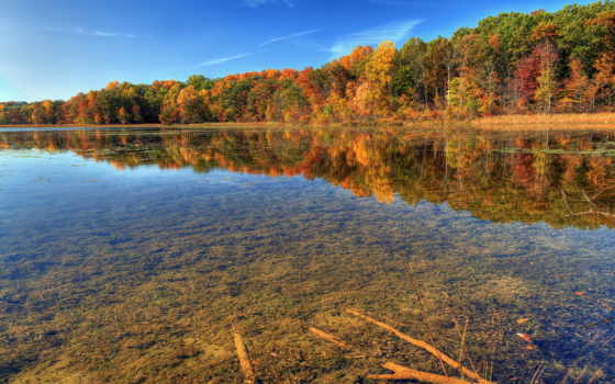 осень, природа, река, прозрачность, лес, фоны,