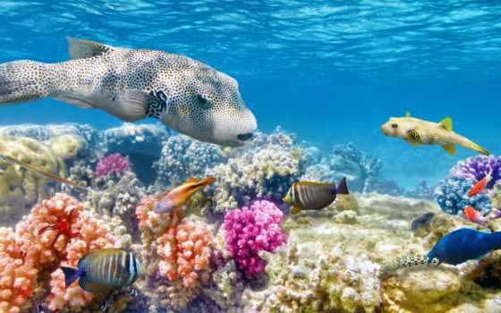 риф, coral, рыбки