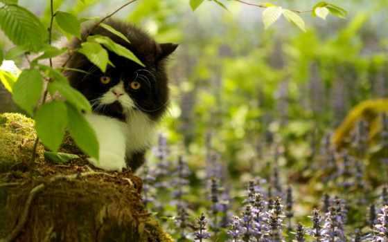 кот, чёрно, торент, white, белая, сидит, добавить, кб,