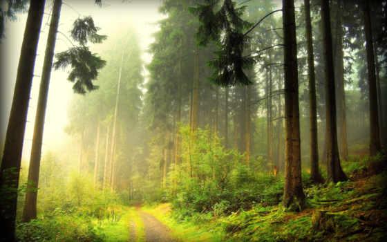 коллекция, красивых, красивые, лес, фотографий, яndex, коллекции, леса,