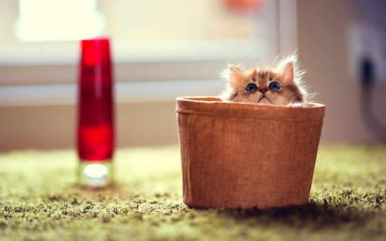 котята, котенок, eimer, pictures, lovers, жизни, просмотров, приколы, мире,