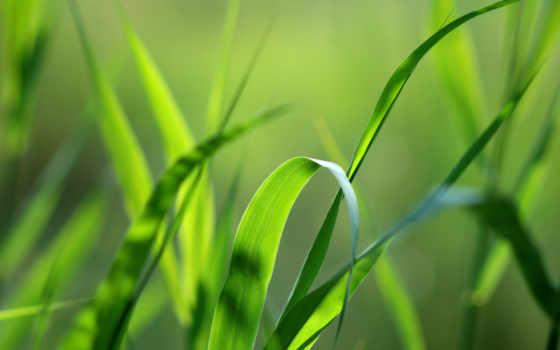 трава, макро, природа, зелёный, природы,