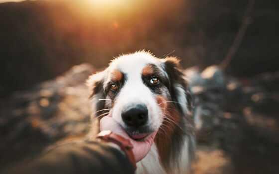 собака, группа, порода, щенок, arm, морда, free, animal, white, поле, northern