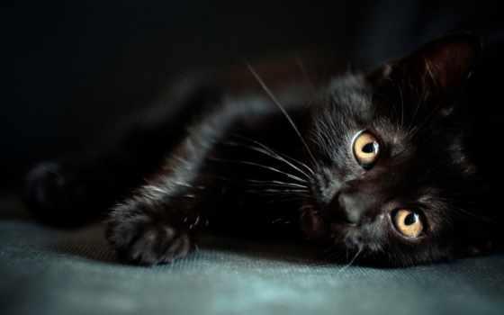 wallpaper, черный, мордочка, котенок, глазки, wallpapers, cat, cats, изображение, top, hdr, коты,