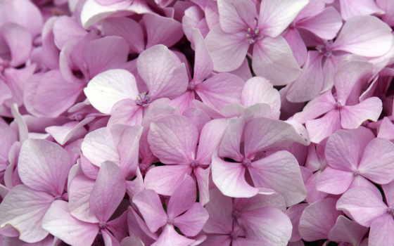 цветы, февр, розы