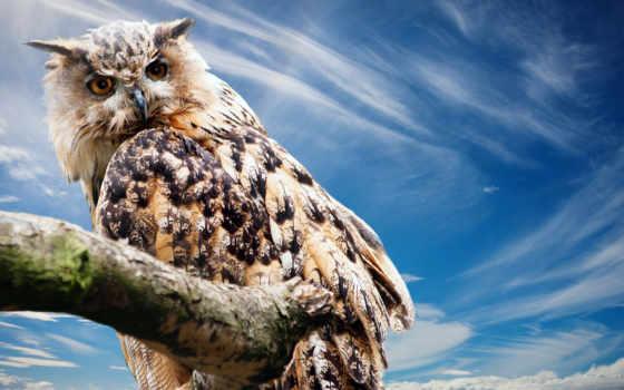animals, desktop, ipad, free, pets, best, birds,