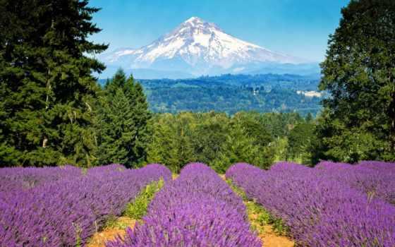 oregon, капюшон, mount, portland, гора, lavender, худ, trees,