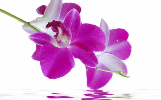 орхидеи, цветы, модульная, картинка, орхидея, купить, со, частей, доставка, холсте, водой,