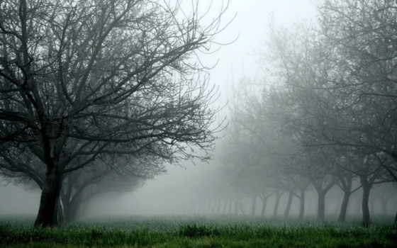 туман, трава, trees