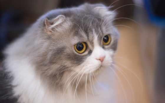 кошки, ус, вибриссы