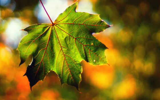 сентябрь, макро, сентября, погода, боке, осень, свет, devushki, лист, forecast,