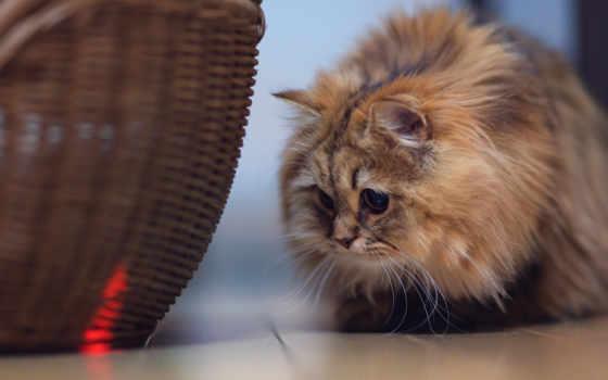 кот, you, cats